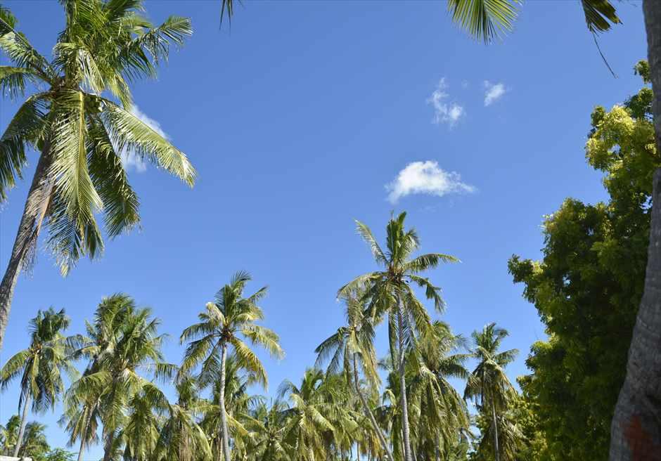 熱帯雨林の生い茂る未開のオランゴ島