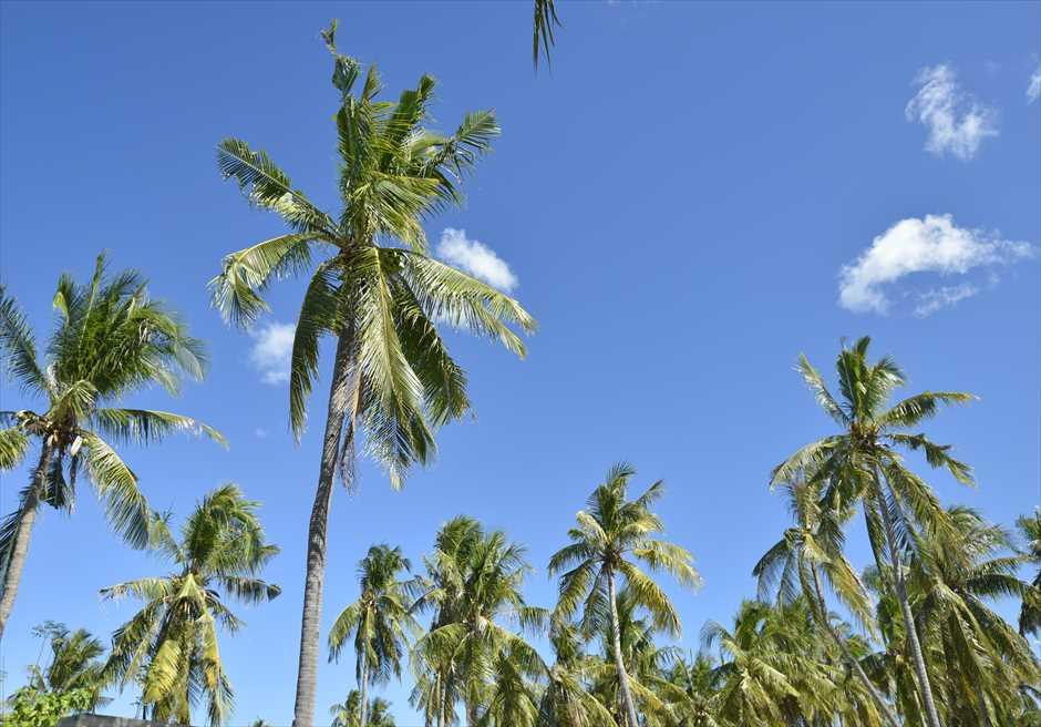 オランゴ島の熱帯雨林