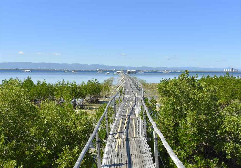 オランゴ島フィッシュサンクチュアリー<br /> マングローブに長い桟橋を歩く