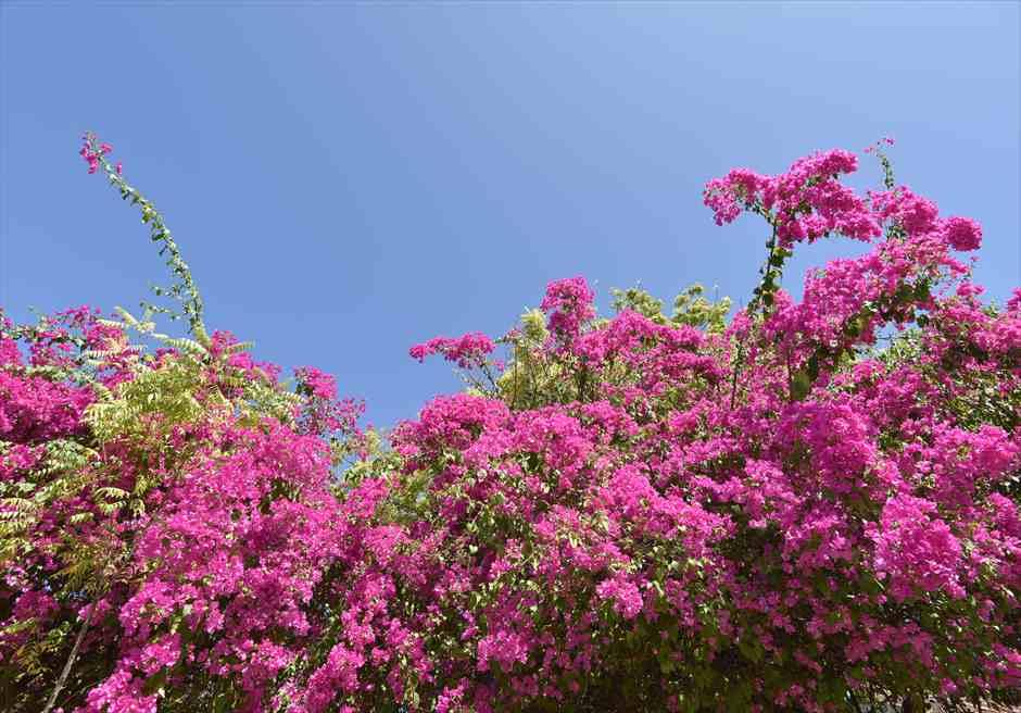 カサブランカ・バイ・ザ・シー<br /> 美しい花々が咲き乱れるガーデン