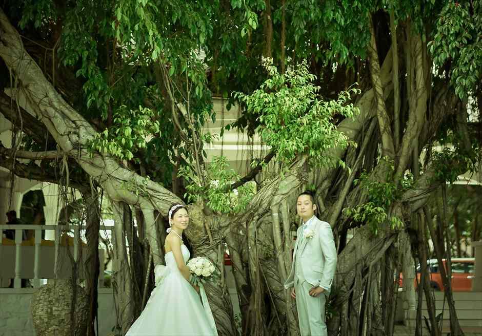 パシフィック・セブ・リゾート<br /> ガジュマルの樹にてフォトウェディング
