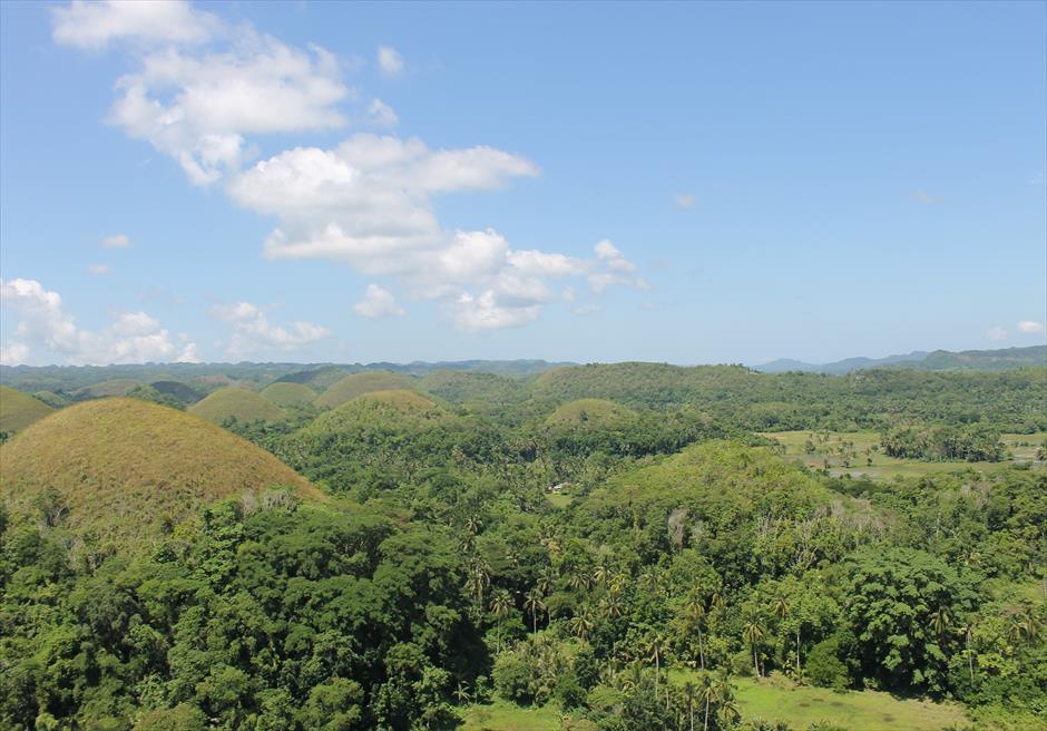 フィリピン・セブ旅行 ボホール島観光スポット ターシャ